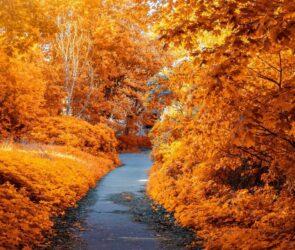 8 drobnych przyjemności na jesień